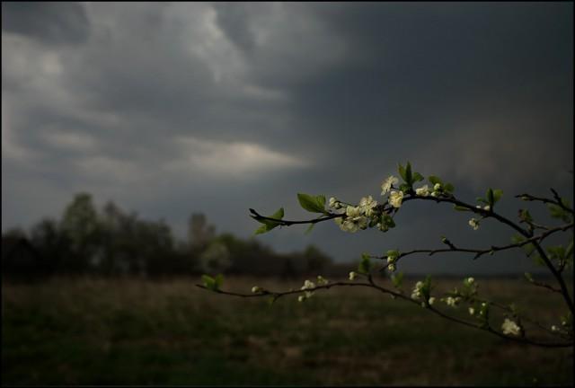 Фотографии перед грозой!