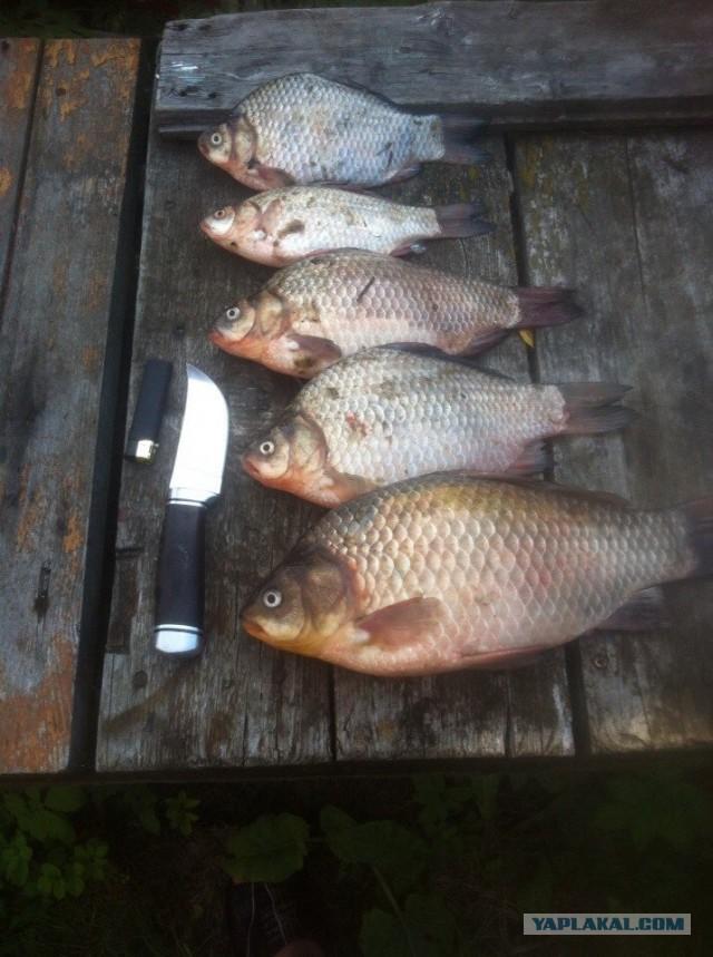 рыбалка в пушкино воскресенский район