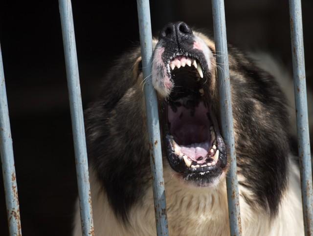 В Подмосковье собаки насмерть загрызли 19-летнего молодого человека
