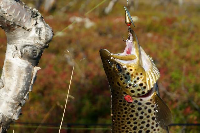 Осень. Заполярная рыбалка