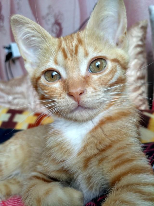 Котёнок-антистресс. Рыжая девочка в добрые руки