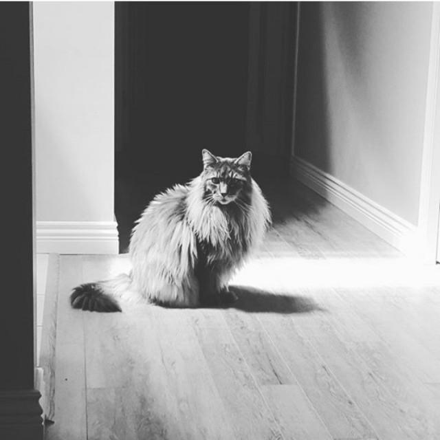 Уже лев или еще кот?