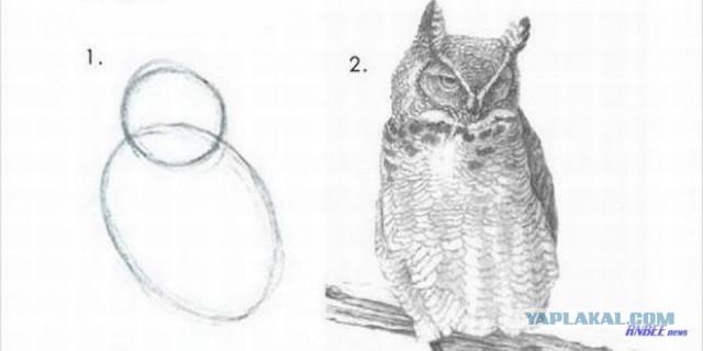 Сказ про то, как я коту дом пилил или как нарисовать сову