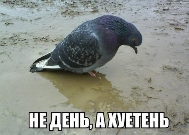 Поговори со мной, Животное!
