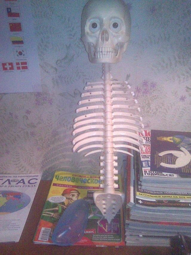 скелет артема схема — как