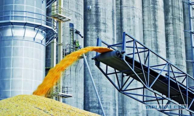 А излишки зерна отдадим нуждающимся странам. Государство определилось с урожаем-2017
