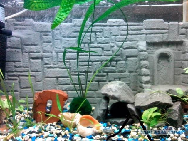 Фон в аквариум своими руками фото