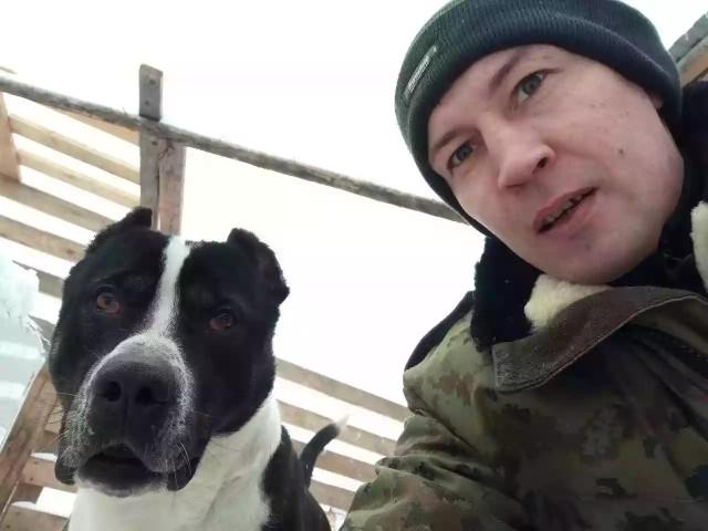 В Карелии пьяный мужик пришел в местный приют для животных и начал натравливать свою бойцовую собаку на привязанных цепью собак