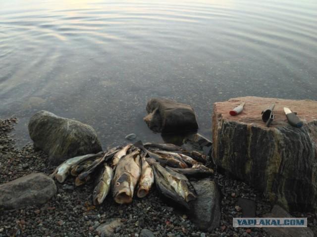 Карелия. Белое море. Немного о рыбалке.