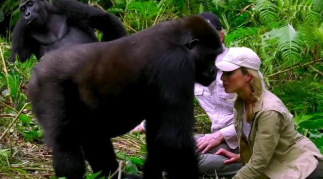 Животный активист утверждает, что забеременела от гориллы чтобы сохранить вид