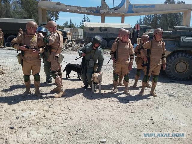 Пальмира: российские саперы с собаками ликвидируют мины ИГИЛ — эксклюзив «Русской Весны»