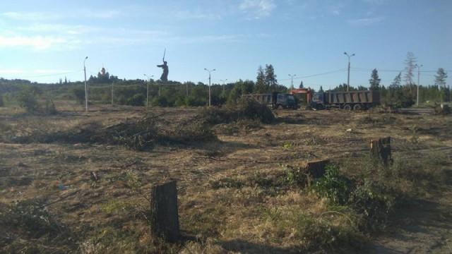 """В Волгограде вырубили """"Парк вдов"""" высаженный женами погибших бойцов."""