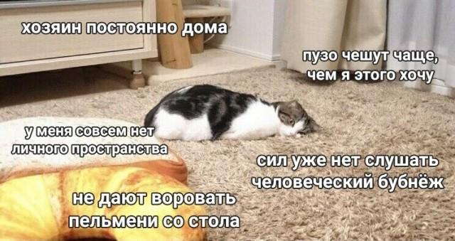 Тяжёлые будни кота во время карантина