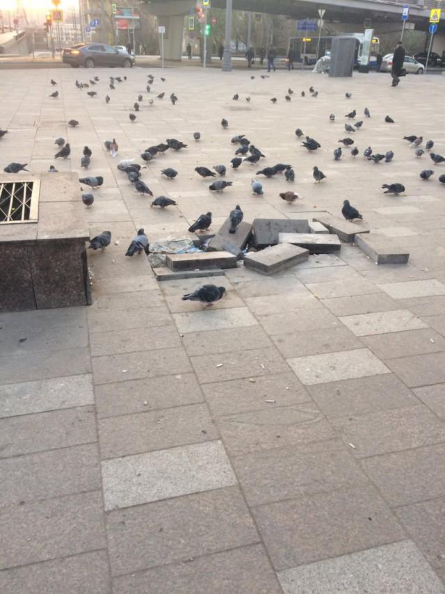 Озверевшие голуби... Будьте осторожны!