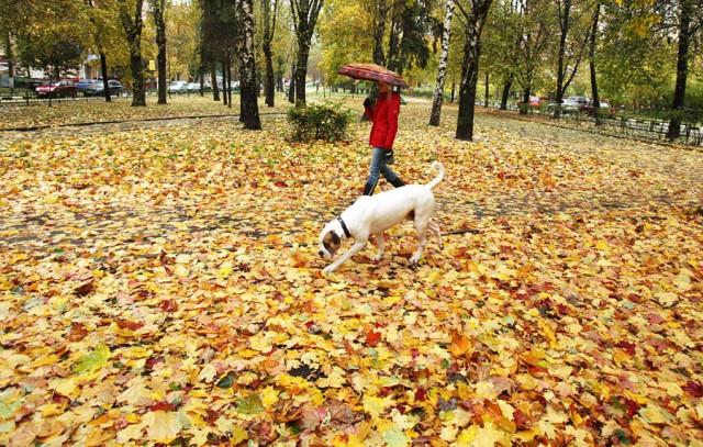 Догхантеры травят собак порошком в парках