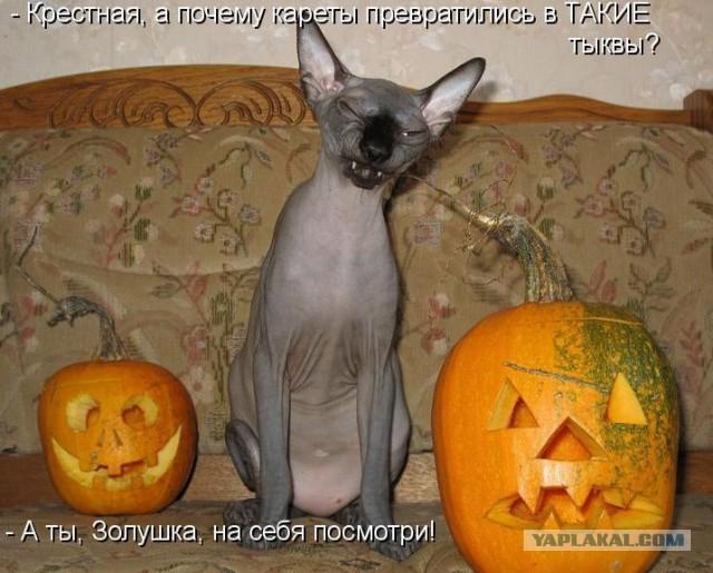 Веселые фотографии из сети - Страница 10 7768295