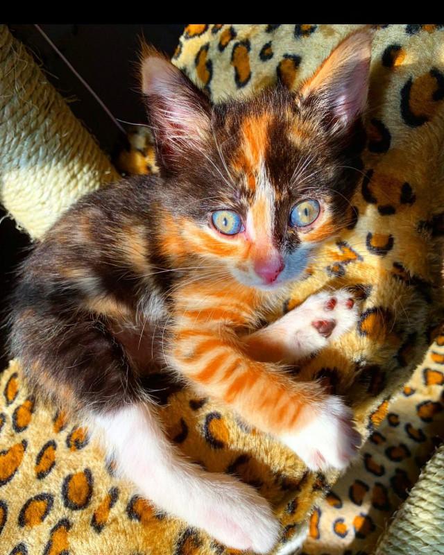 Это, наверное, самый разноцветный из всех котят, которых я видел