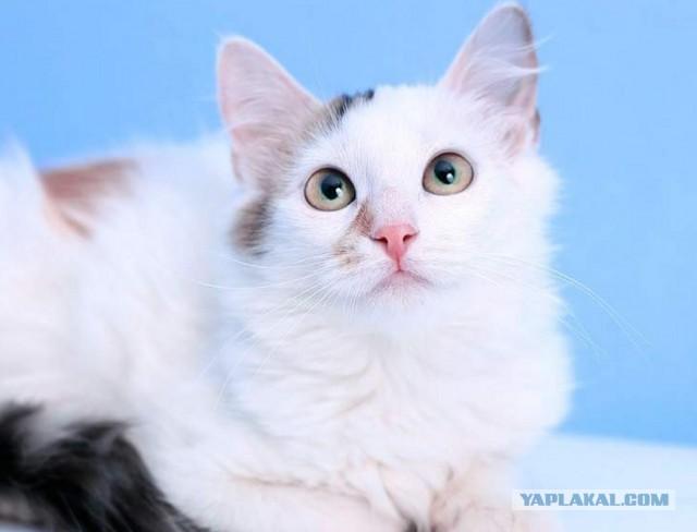 котенок Юкка