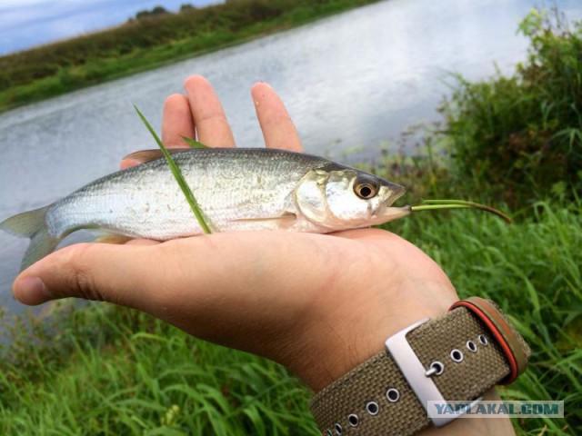 рыбалка на протве у оки