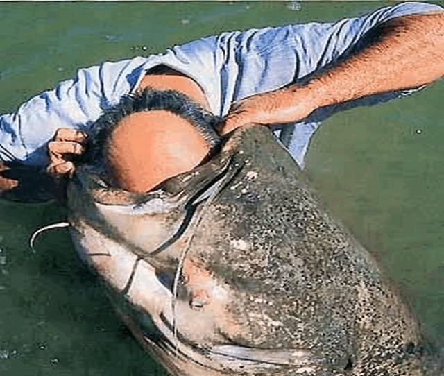 рыбаки съели своего