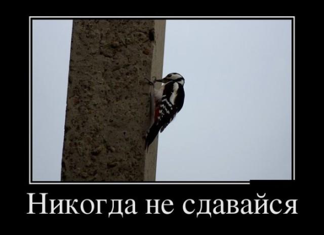 http://s00.yaplakal.com/pics/pics_preview/6/0/5/6414506.jpg