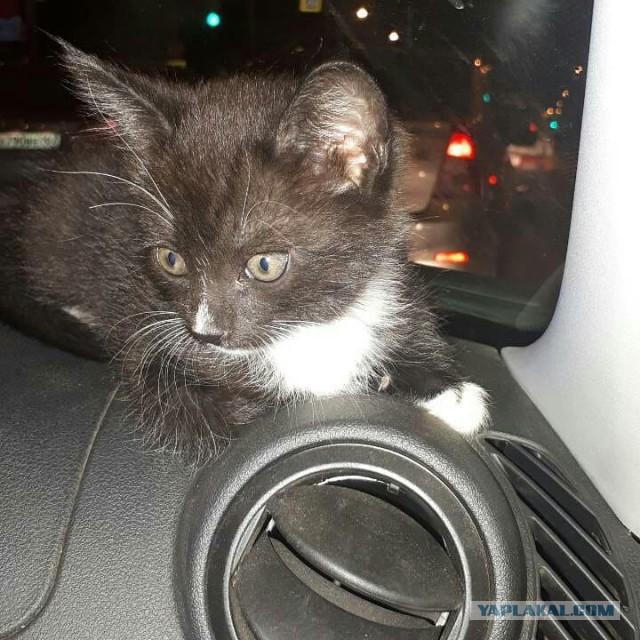 Котёнок ищет хозяина в Самаре!