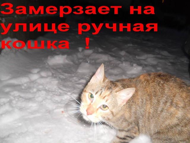 [СПб] Замерзает на улице ручная кошка