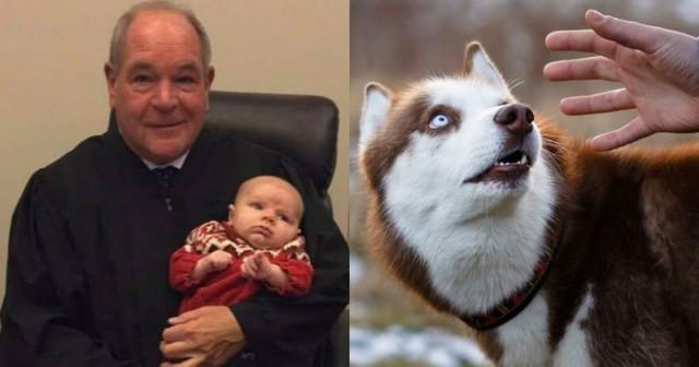Этот судья заставляет обидчиков животных испытать то же, что они сделали с животными