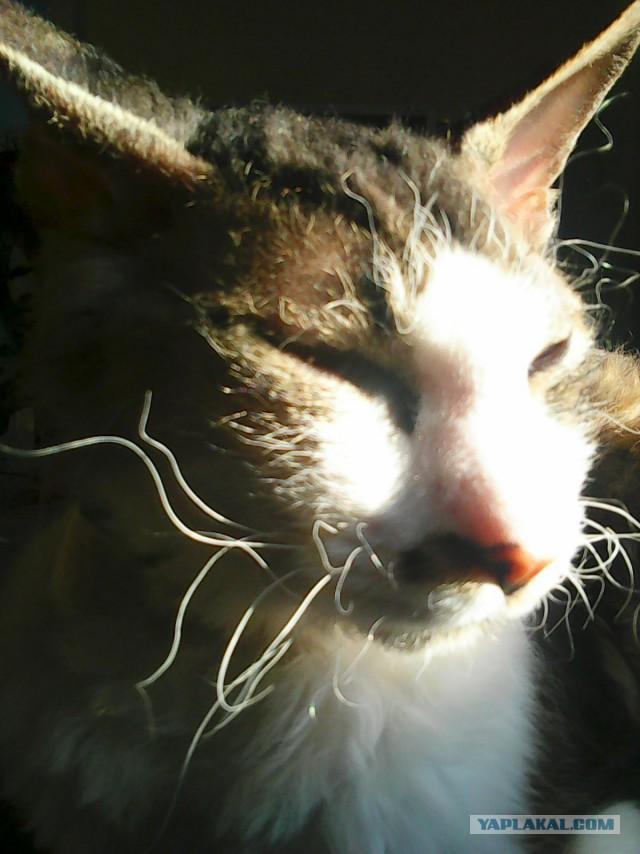 История принятия кошки, которая отличалась от остальных!