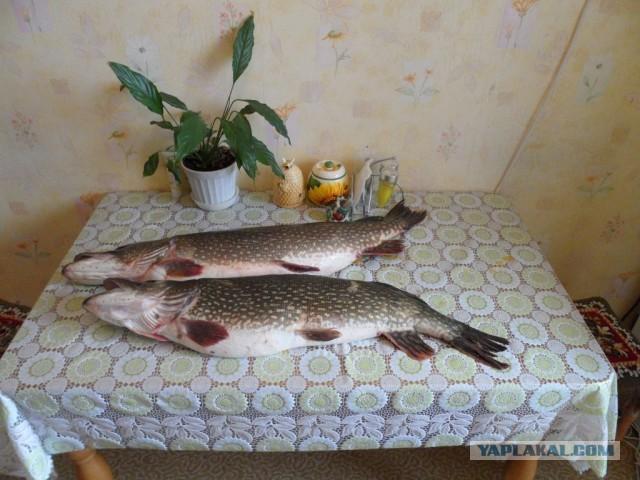 сонник ловить большую рыбу щуку