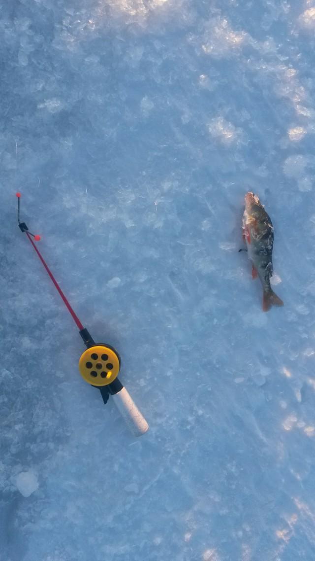 рыболовная в забайкалья