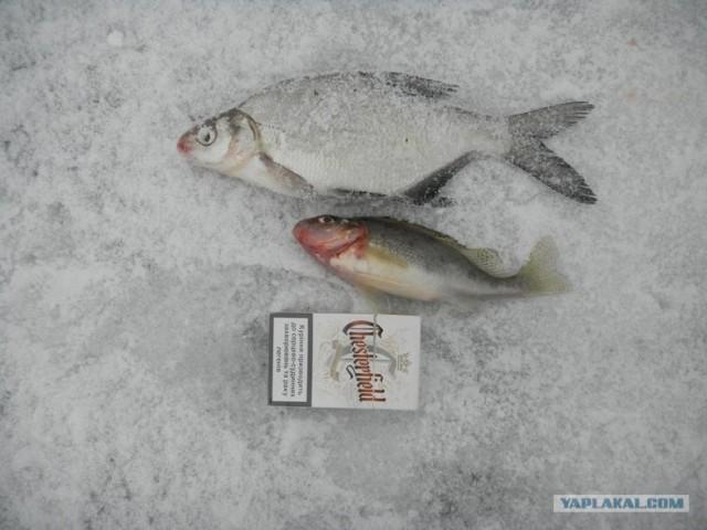 Фотоотчет. Зимняя рыбалка.
