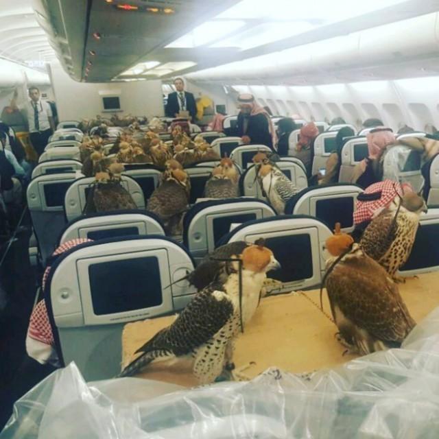 Доказательства того, что на борту самолета может случиться все что угодно