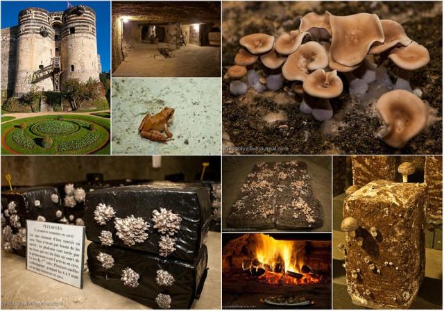 Как во Франции выращивают грибы?