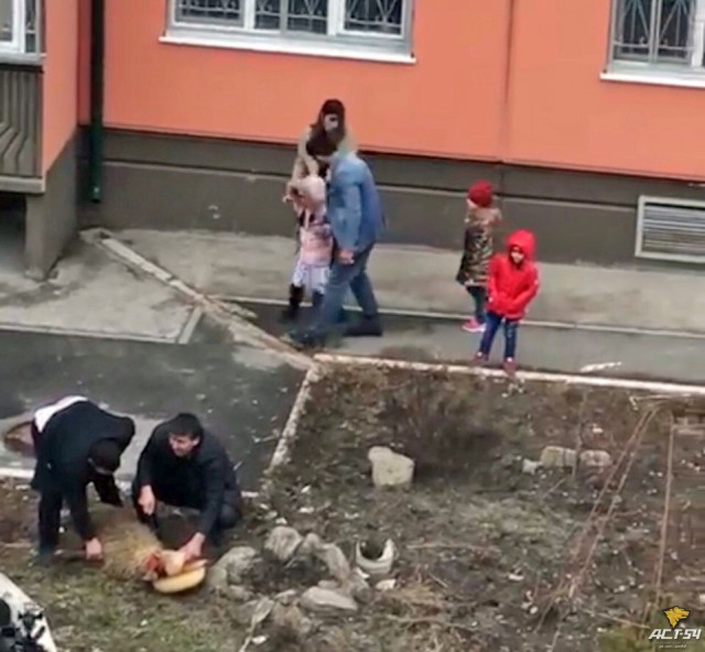 Баранов зарезали на глазах у детей в Новосибирске