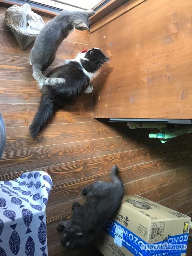 Реальная жизнь. Три кота и родилась Вика