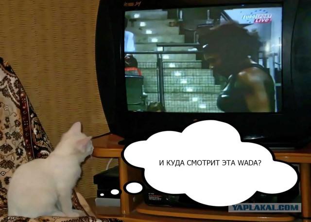 Кот мешает читать ЯП