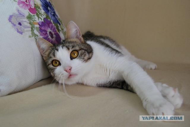 Кому молодого, симпатичного   и нежного котика? Москва.