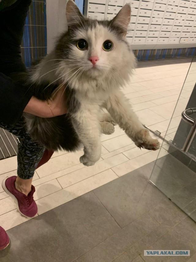 Кошка ищет хозяев (7 фото)