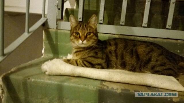 Помогите пристроить кота в Ростове-на-Дону!
