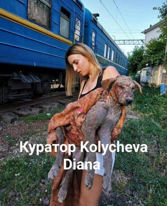Собаки кусают только плохих...