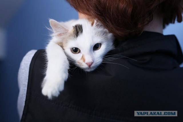 Котята-симпатяги: девочка белая трехцветная и парень-шпротик. Ищу ручки.
