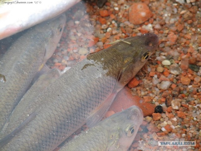 прогноз клева рыбы в ельцовка