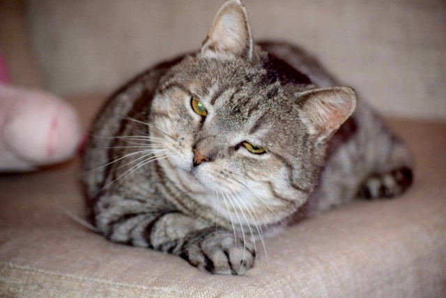 Котик Боцман ищет дом и любящих хозяев