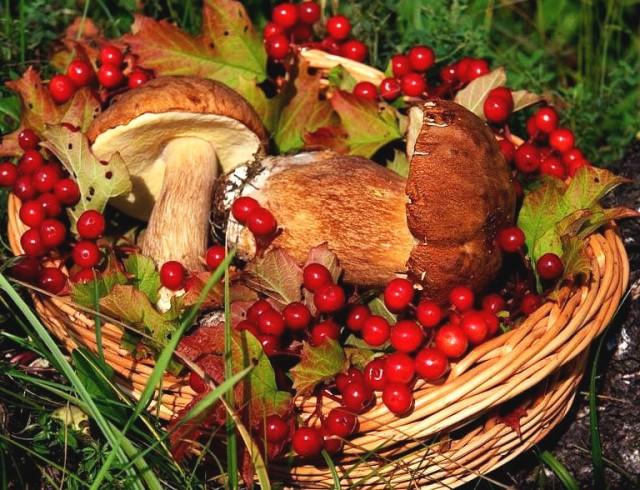 Ну вот и налог на сбор грибов, ягод и растений уже совсем на подходе