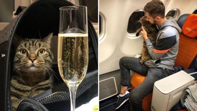 «Аэрофлот» лишил пассажира бонусных миль за перевозку толстого кота в самолете