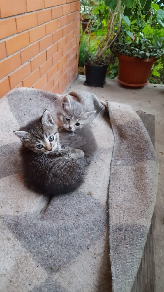 Две малышки из Щербинки, потомственные крысоловки