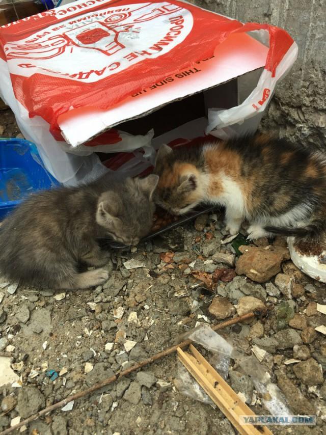 2 Котейки сироты. Возьмите в добрые руки