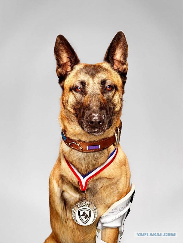 19 невероятных случаев, когда собаки поражали людей своим героизмом