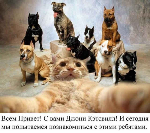 Самые известные мемы в истории Интернета